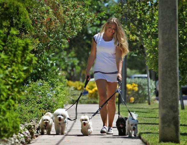 Your Good Dog - Dog Boarding, Dog Daycare